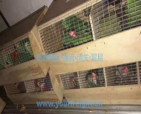 Import parrot to China_International freight forwarder|customs clearance|Import and export agent|Beijing Yangrui International Freight Agency Co.,LTD